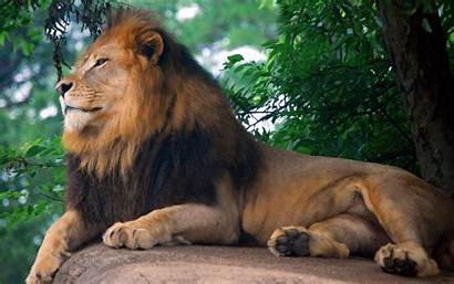 Lion King Zoo Wallpapers 1200 1920 1600