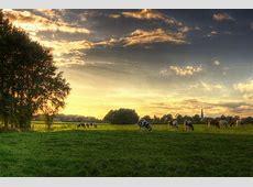 dutch landscape wallpaper cows zoutedrop Flickr