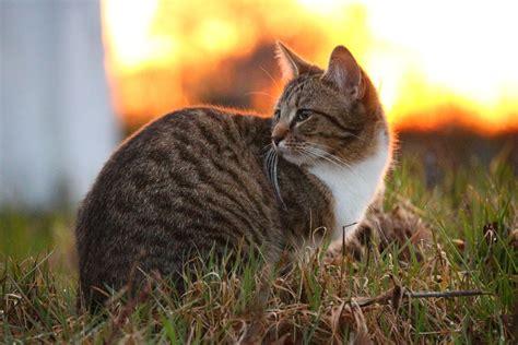 picture cute sunset animal cat nature fur