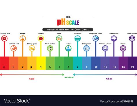 thermometer for ph scale universal indicator ph color chart vector image