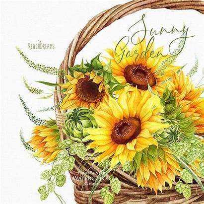 Clipart Watercolor Sunflowers Flower Sunflower Clip Painted