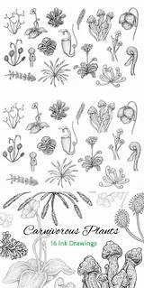 Plant Drawing Carnivorous Plants Tattoo Coloring Carnivore Aesthetic Plante Vine Lessons Tattoos Paper sketch template