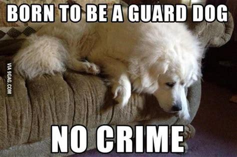 Dog Problems Meme - 17 adorable problems that drive dogs crazy rover com