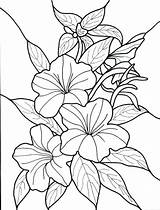 Coloring Pages Plants Flower Flowers Jungle Tropical Garden Rainforest Advanced Pdf Clipart Sheet Getcolorings Printable Getdrawings Colorings sketch template