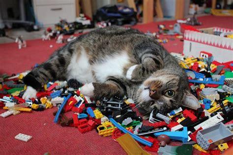 Cats Sleeping On Lego Piles