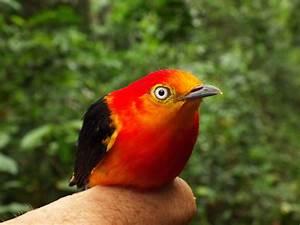 Free Images : nature, flower, wildlife, beak, fauna ...