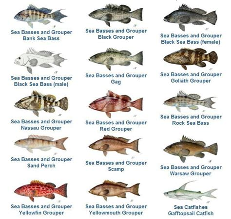 grouper species fishing closes several warsaw january