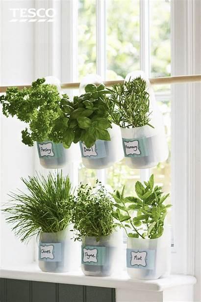 Herb Garden Kitchen Diy Herbs Hanging Milk