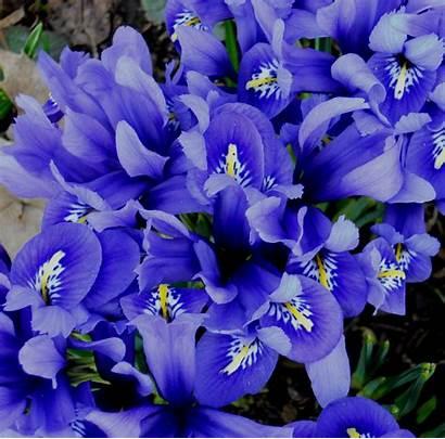 Flowers Annual Spring Purple Brown Flower Winter