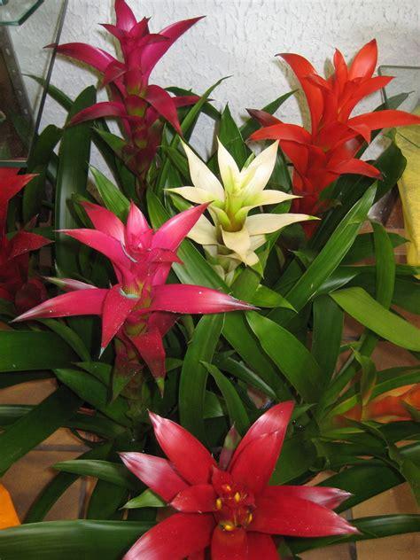 plante d interieur fleurie plante exotique int 233 rieur plantes vertes et fleuries d interieur maryflor fleurs