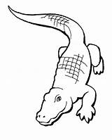 Crocodile Coloring Nile Pages Getdrawings sketch template