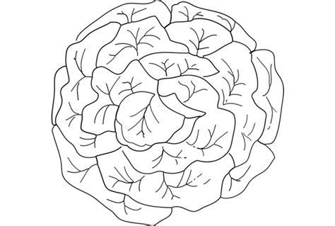 dessin d une cuisine laitue dessin