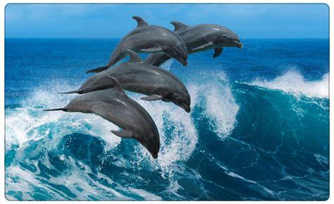 Wandtattoo Kinderzimmer Delfin by Delfine Meer Welle Delfin Wandtattoo Wandsticker