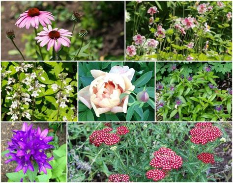 easy to grow perennials 10 cut flower perennials that are easy to grow