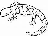 Coloring Dragon Pages Bearded Lizard Gecko Popular sketch template