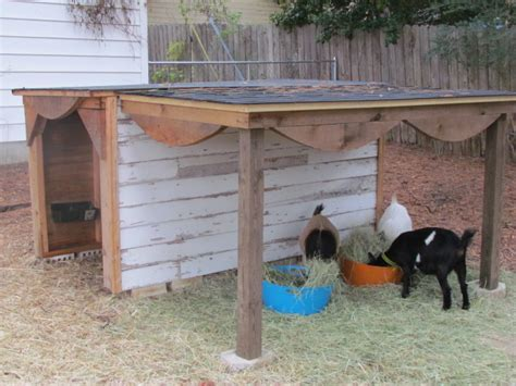 review   build goat shed