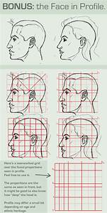 Human Face Proportions