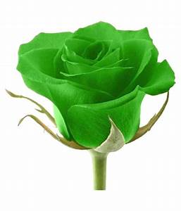 E Garden Green Rose Flower Seeds: Buy E Garden Green Rose ...