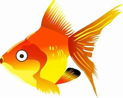 Cartoon Fish Goldfish Orange Sea Pixabay Vector