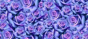 Tumblr Backgrounds Blue Roses