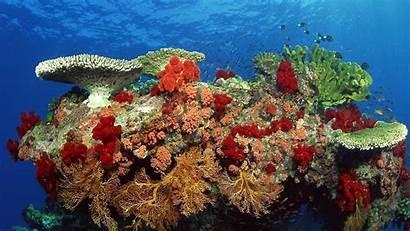 Sea Wallpapers Wallpapersafari Wallpaperssea