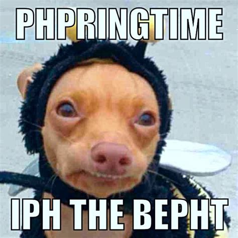 Tuna Meme - tuna the dog meme phteven www pixshark com images