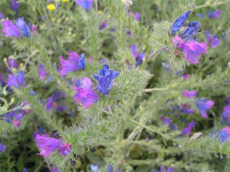 wildflowers cat yahoo comment july leave