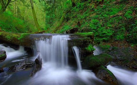 waterfall mountain river dry fallen tree moss rock noise