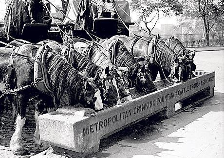 working horses drinking   cattle trough google search
