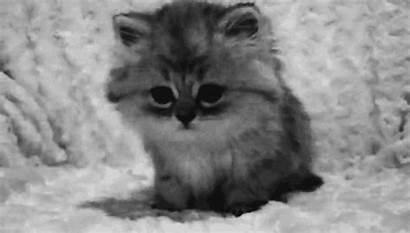 Cat Kitten Gifs Giphy