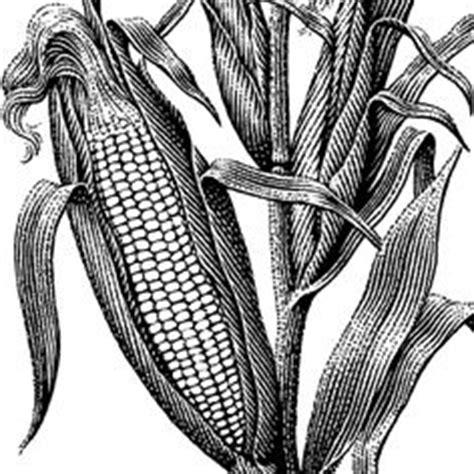Corn Stalk Stencil Drawing Google Search Refinished