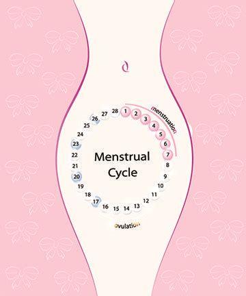 ovulation berechnen eisprung berechnen berechnung der