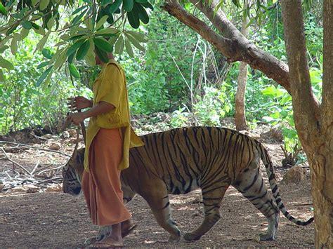 tiger temple wikipedia
