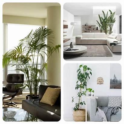 Salon Plante Decoration Plantes Avec Interieur Decorer