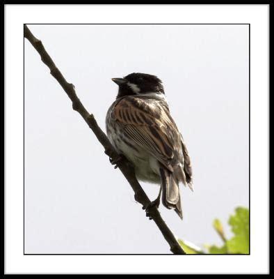 british birds photo gallery  gary martin  pbasecom