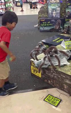 scary spider gifs find share on giphy