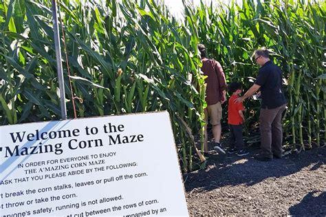 petaluma pumpkin patch  amazing corn maze marin mommies