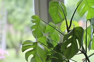 Pflanzen Für Gesundes Raumklima : pflanzen garten ~ Indierocktalk.com Haus und Dekorationen