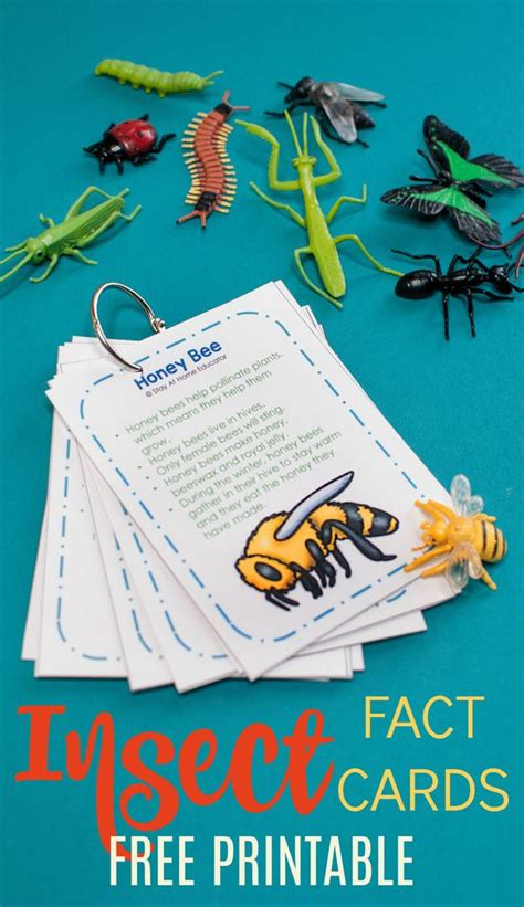 teach cool bug facts   preschool insect theme