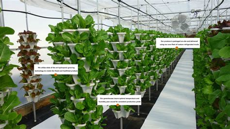 Vertical Hydroponic Gardening by Hydroponic Growing System Mr Stacky Vertical Gardening Farms
