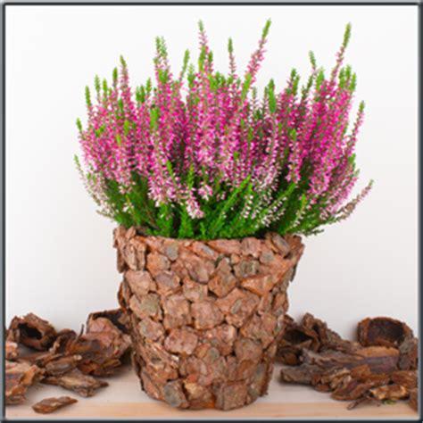 bastelideen zum geburtstag für männer diy 220 bertopf basteln bastelidee mit rindenmulch einen nat 252 rlichen 220 bertopf gestalten