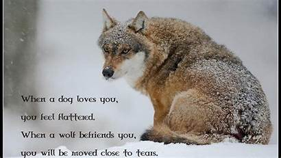 Wolf Spirit Quotes Pack Quotesgram Mythical