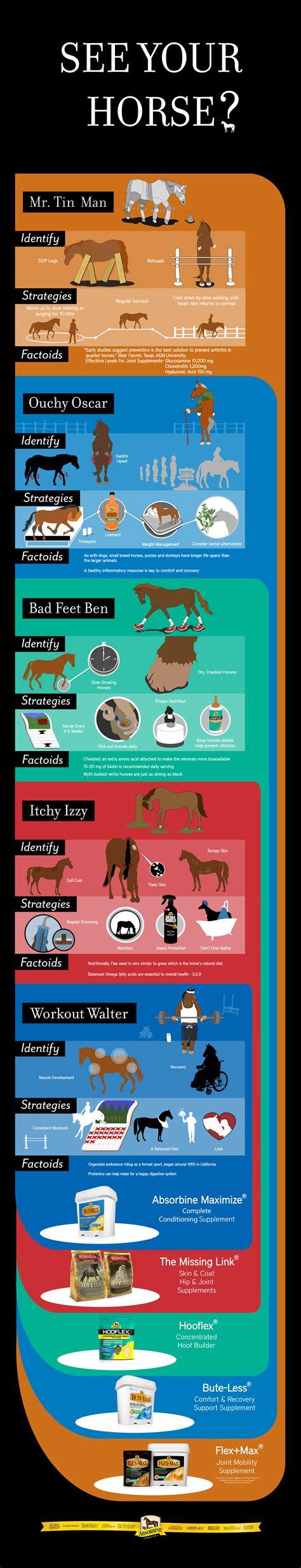 horse supplements horses