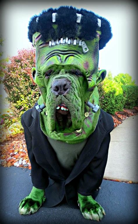 cool pet costumes  halloween hative