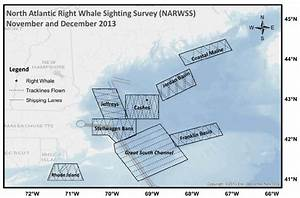 D  North Atlantic Right Whale Sighting Survey  Narwss