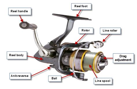 Boat Names Using Reel by Tackle Guide Best Spinning Reel For 2018 Bc Fishing Journal