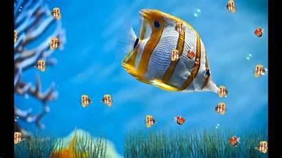 Animated Aquarium Marine Screensaver Desktopanimated