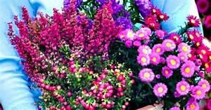 Pflanzen Für Balkon : herbst pflanzen und deko f r balkon und terrasse deko garten and winter ~ Sanjose-hotels-ca.com Haus und Dekorationen