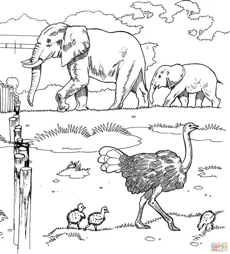 ostriches  elephants   zoo coloring page