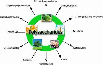 Polysaccharides Hydrophobic Starch Pectin Chitin Chitosan Non